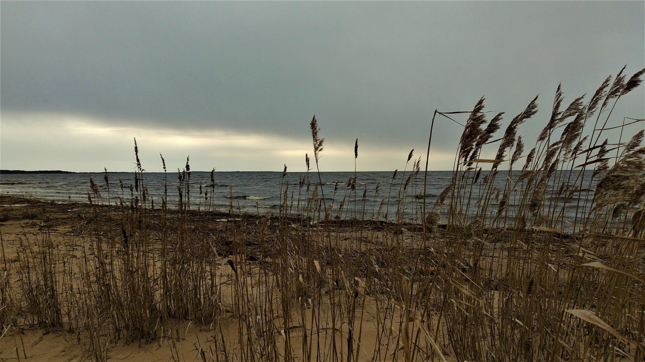 Берег Чудского озера
