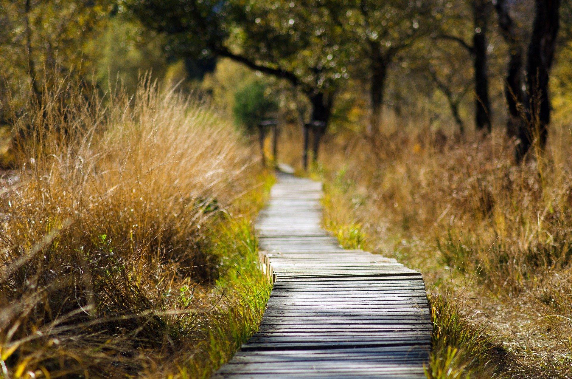 Экологический туризм: экотропа в лесу