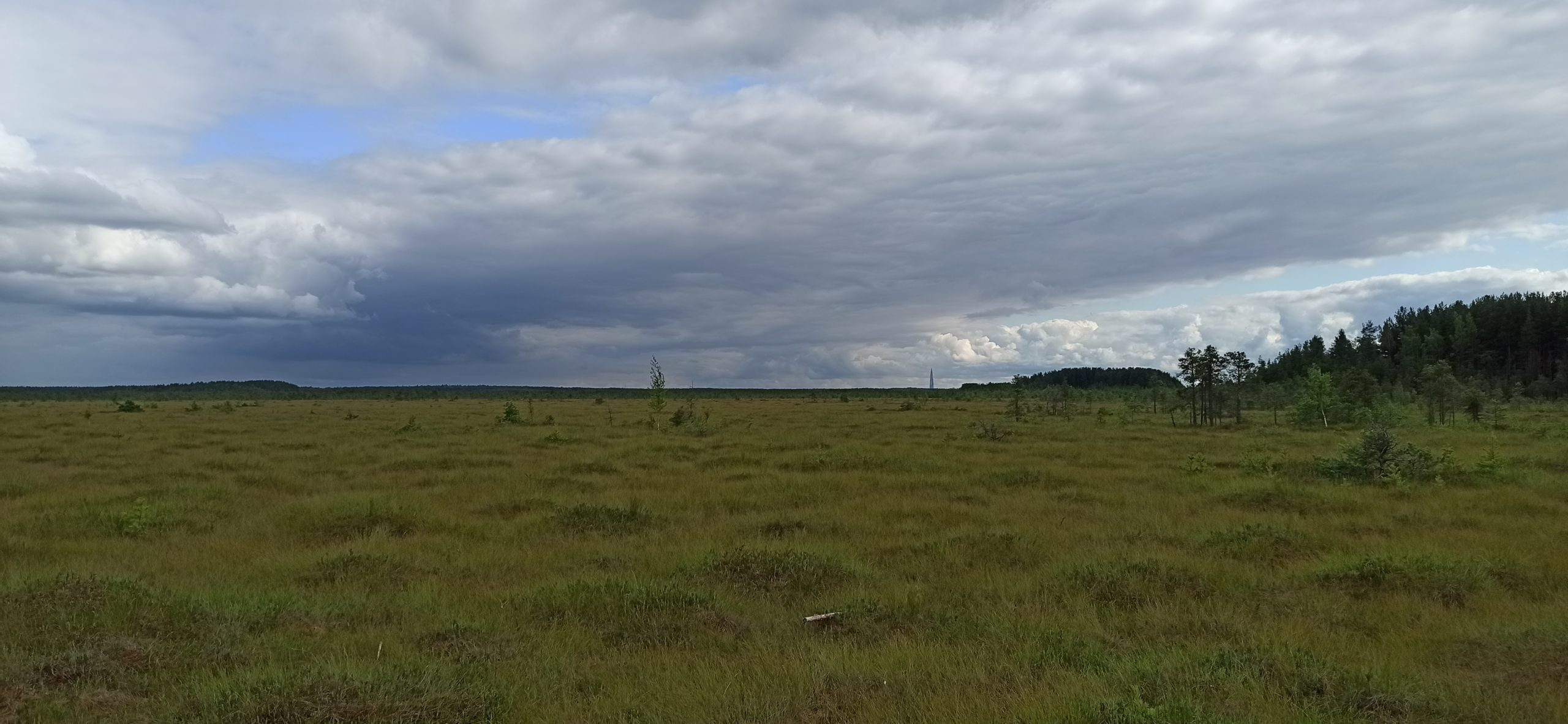 сестрорецкое болото